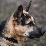 ataman_balashiha_dogs020