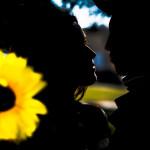 love_story_podsolnuh003