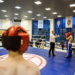 kickboxing_balashiha_gold_2015_065