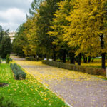golden_autumn_2016_005