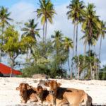Zanzibar_2018-06-2