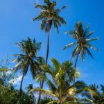 Zanzibar_2018_Nungwi01