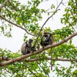 Zanzibar_2018_nature05