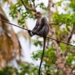 Zanzibar_2018_nature08
