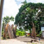 Zanzibar_2018_nature16