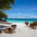 Zanzibar_Nungwi-609