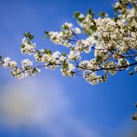 Фотосессия в цветущих садах, Москва: Коломенское, Царицыно, Ботанический сад